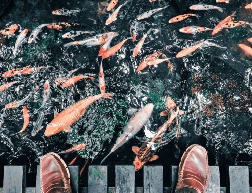 Holistic Nutrionist Sandra Millward Serves Up Fish Benefits